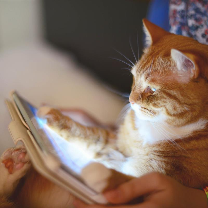 Cat with Paws on IPAD